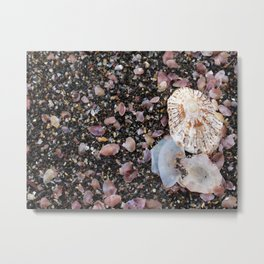 Shells at the beach Metal Print