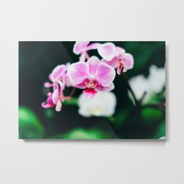 Fuji Color Orchid  at FPC Metal Print