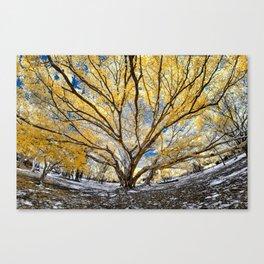 Gorgeous Big Tree Canvas Print
