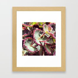 dew drops Framed Art Print