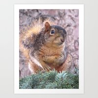 squirrel Art Prints featuring Squirrel by Sarahpea