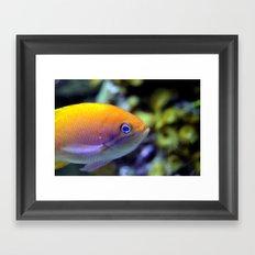 Hey fish!  Framed Art Print