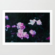 pastel roses Art Print