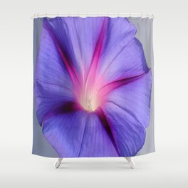 Close Up of A Morning Glory Purple and Pink Flower Shower Curtain