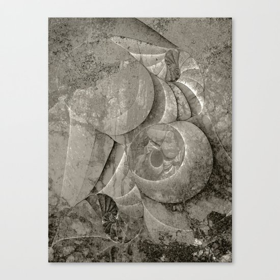 Fossilized Shells - Black & White Canvas Print