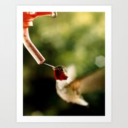 Tale of a Humingbird Art Print