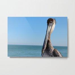 Pelican Stare Metal Print