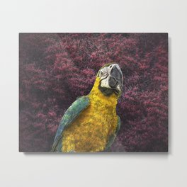 Macaw's delight Metal Print
