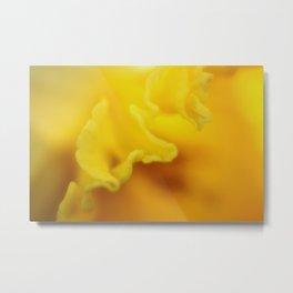Daffodil Frill Metal Print
