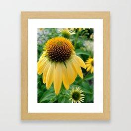 Yellow Echinacea/Coneflower Framed Art Print