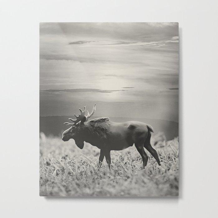 Moose Walk  Metal Print
