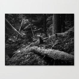 Missisquoi River in Vermont - 3 BW Canvas Print