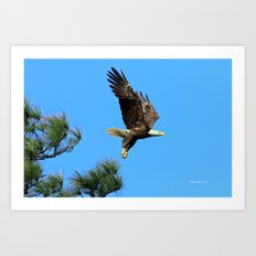 Eagle Series 1 2017 Art Print