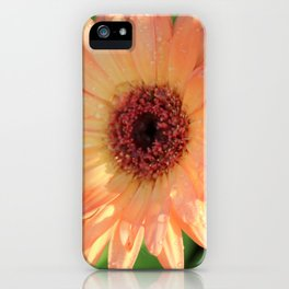 Daisies and Dew Drops iPhone Case