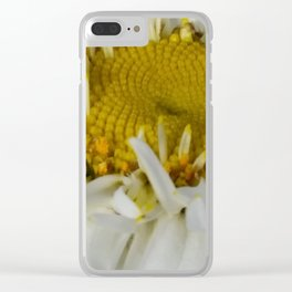 Shasta daisy  five Clear iPhone Case