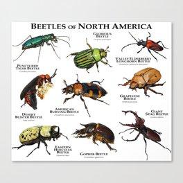 Beetles of North America Canvas Print