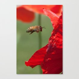 The Levitating Bee Canvas Print