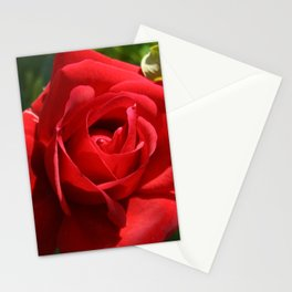 Beautiful Climbing Red Rose Close Up Photograph Stationery Cards