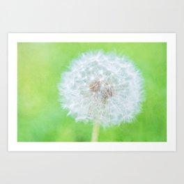 Dandelion - Just Woke Up Beauty Art Print
