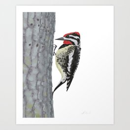 Yellow-bellied Sapsucker Art Print