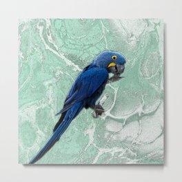 Guacamayo Azul - Hyacinth Macaw Metal Print
