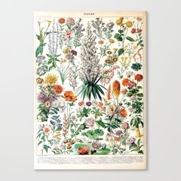 Adolphe Millot - Fleurs B - French vintage poster Canvas Print