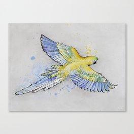 Parrot -- Blue & Yellow Canvas Print