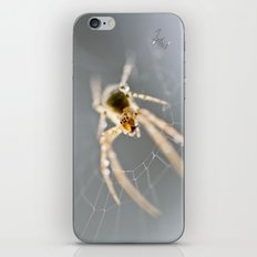 Little Spider iPhone & iPod Skin