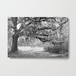 New Orleans Oak Tree Metal Print