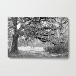 New Orleans Oak Tree Metal Print