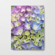 AZISAI/紫陽花 Metal Print