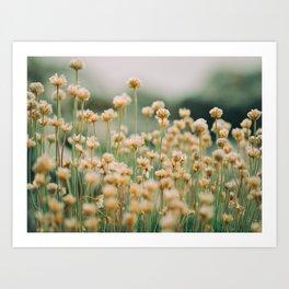 Vintage Chamomile Wildflowers Art Print