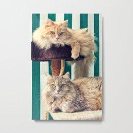 Siberian cats on the cat tree Metal Print