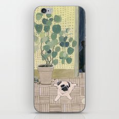 Pug Puppy Playing iPhone & iPod Skin