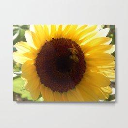 Sunflower bee buddies Metal Print