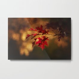Red Maple Leaf Autumn Colors Photography Metal Print