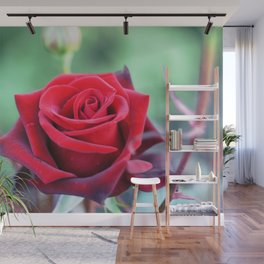 Roses on the city flowerbed. Wall Mural