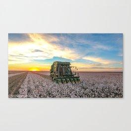 Cotton picker sunset. Canvas Print
