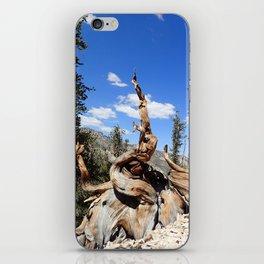 Ancient bristlecone tree iPhone Skin