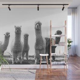 alpaca posse Wall Mural