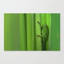 Green Grasshopper on Green Leaves Canvas Print