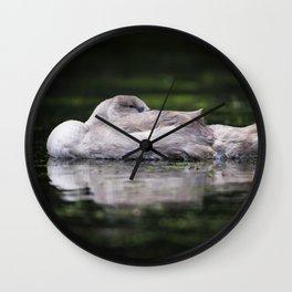 Resting Cygnet Wall Clock