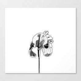 Desert Iris Canvas Print