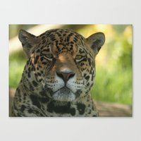 jaguar Canvas Prints featuring Jaguar by Sean Foreman