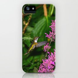 Hummingbird and agastache flower 60 iPhone Case
