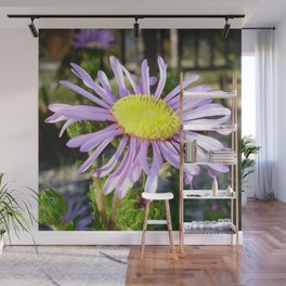 Close Up of A Violet Aster Flower Spring Bloom  Wall Mural