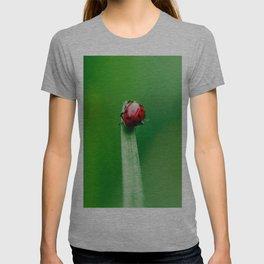 Balancing Acts T-shirt