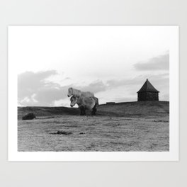 Two Dartmoor ponies in the early morning Art Print
