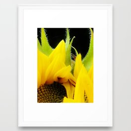 Sunflower 1 Framed Art Print