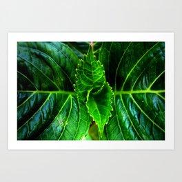 New Plant Growth Art Print